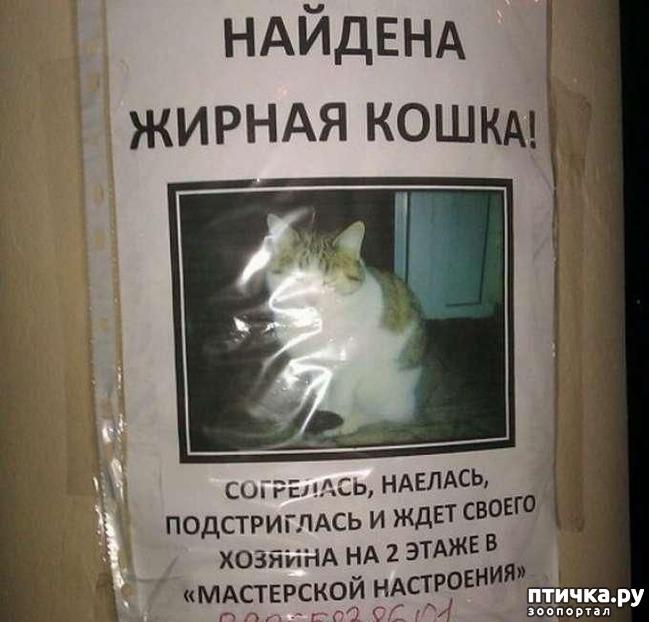 фото 6: Забавные объявления про животных 2