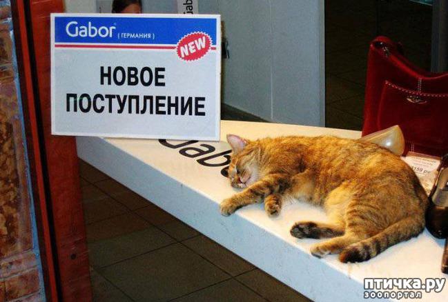 фото 7: Забавные объявления про животных 2