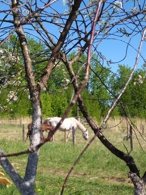фото: Ещё один день бывшей москвички. Кони на селе.