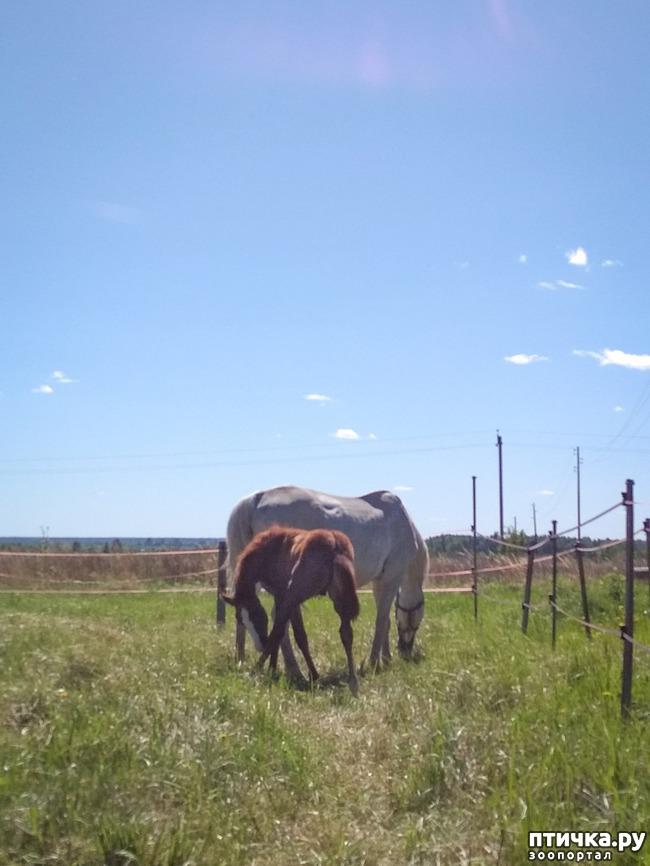 фото 2: Ещё один день бывшей москвички. Кони на селе.