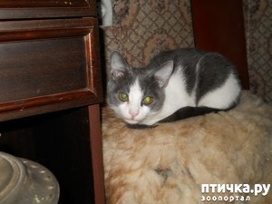 фото: Жизнь с кошками, уход за кошками