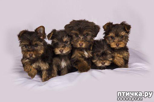 фото 2: Прививки для собак. Часть первая. Сыворотка Гискан-5.