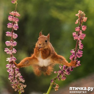 фото: Забавные фотоснимки с конкурса Comedy Wildlife Photography Awards 2018