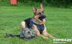 фото: Как научить собаку команде место