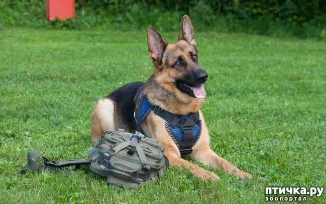 фото 1: Как научить собаку команде место