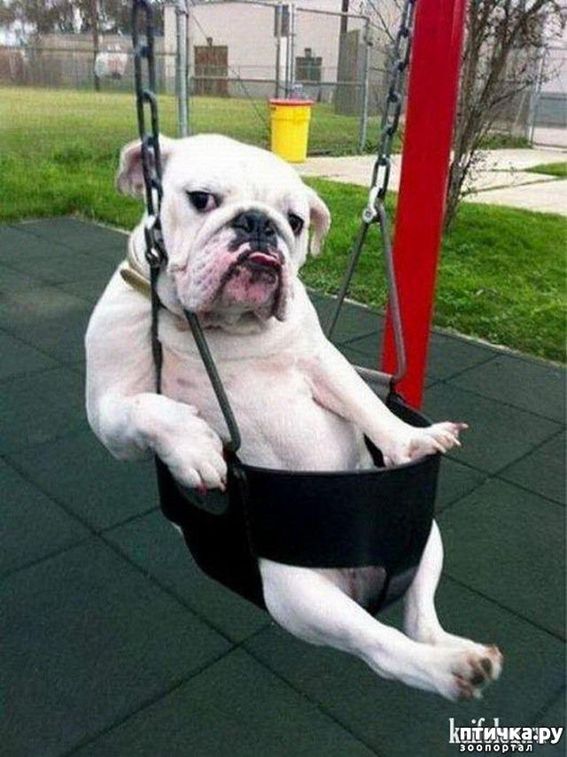 фото 1: Смешные фото собак