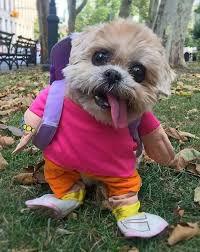 фото 2: Смешные фото собак