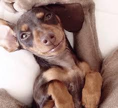 фото 6: Смешные фото собак