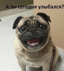 фото 7: Смешные фото собак