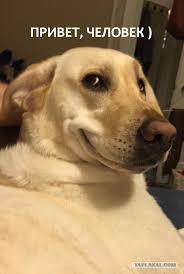 фото 10: Смешные фото собак