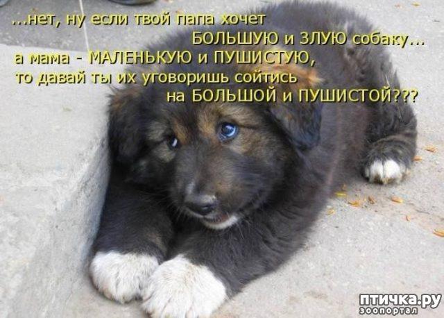 фото 12: Смешные фото собак