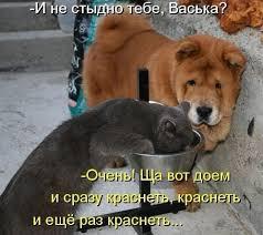 фото 15: Смешные фото собак