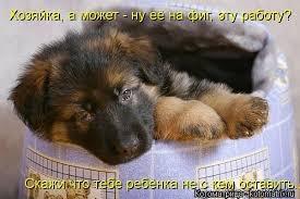 фото 16: Смешные фото собак