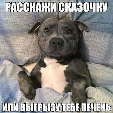 фото 17: Смешные фото собак