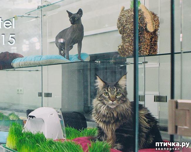 фото 3: Люди, отпуск и кошки