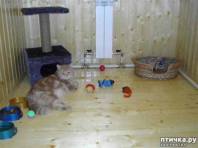 фото 4: Люди, отпуск и кошки
