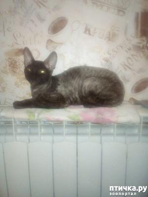 фото: Из-за алчности ветеринара потеряли котят.