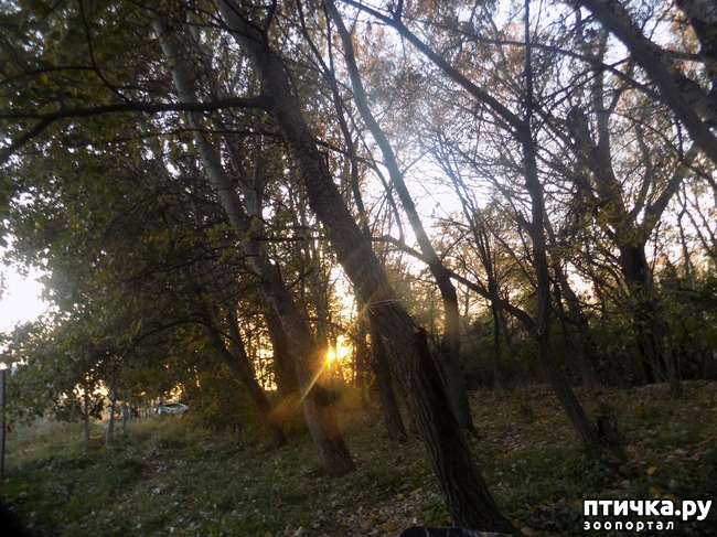 фото 17: Осенний привет и последние новости