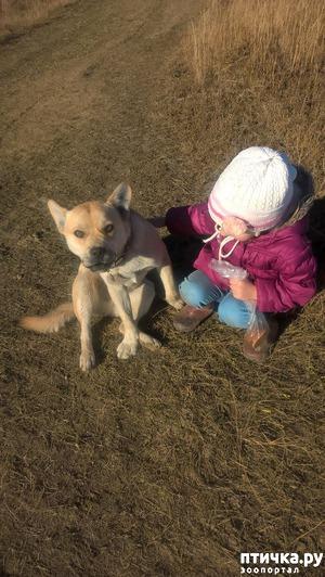 фото: Не перекармливаю ли я пса?
