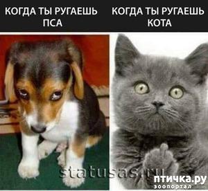 фото: Смешные фото животных