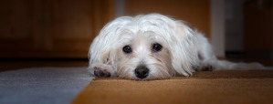 фото: Стресс у собак