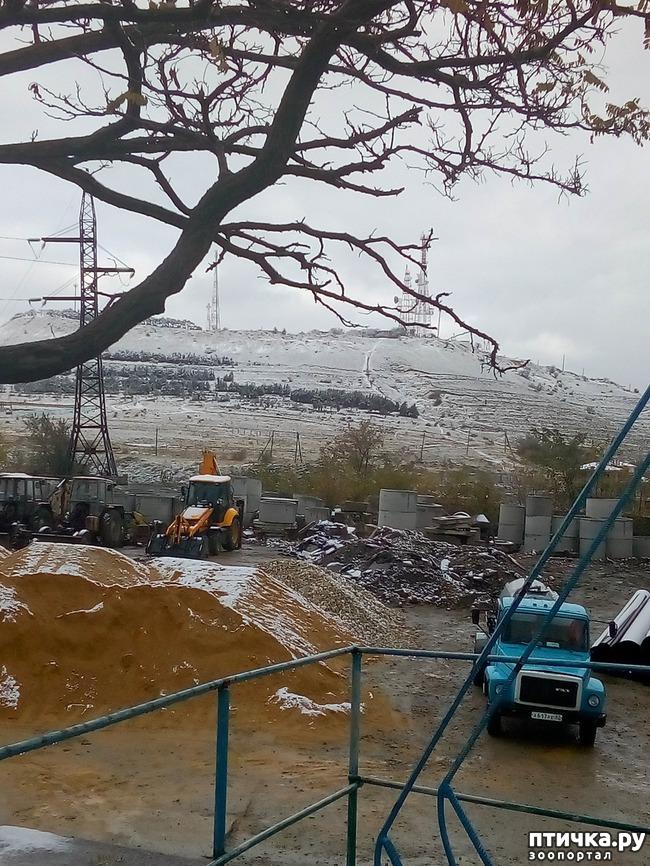 фото 2: Первый снег. Феодосия