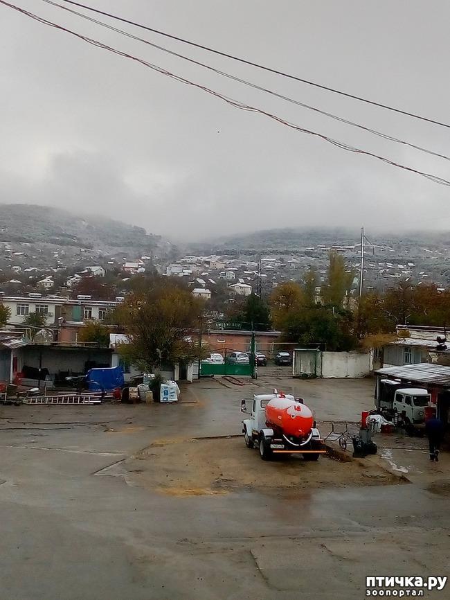 фото 1: Первый снег. Феодосия