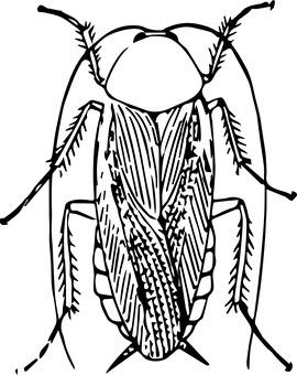 фото 1: Слово о таракане.