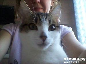 фото: Что еще может быть с кошкой?