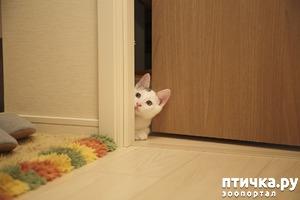 фото: Почему кошки не любят закрытых дверей?
