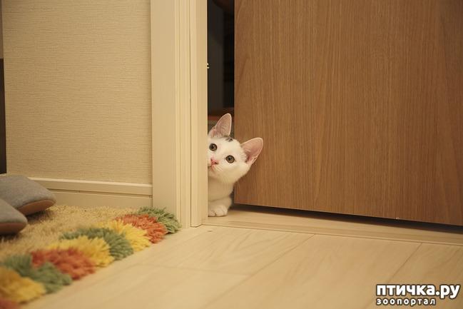фото 1: Почему кошки не любят закрытых дверей?