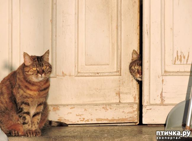 фото 2: Почему кошки не любят закрытых дверей?