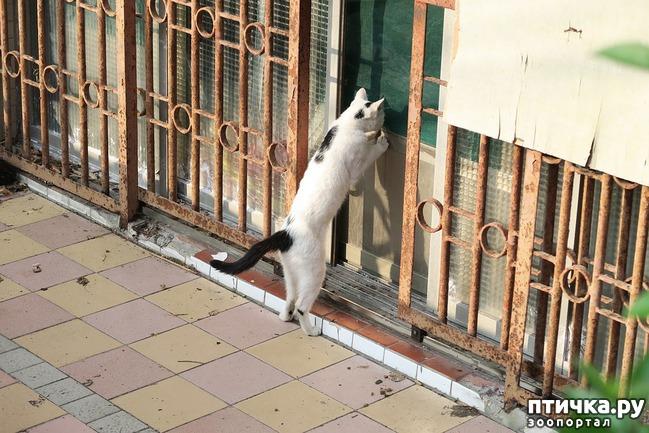 фото 3: Почему кошки не любят закрытых дверей?