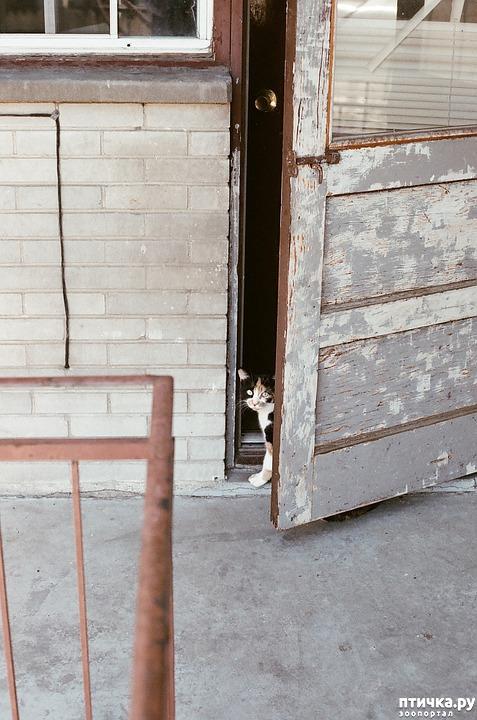 фото 5: Почему кошки не любят закрытых дверей?