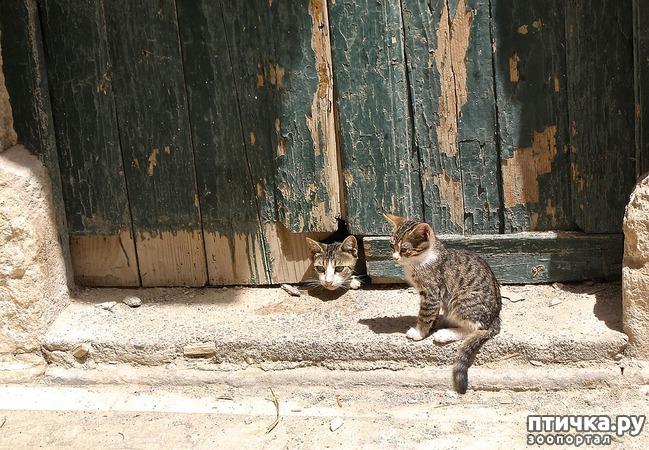 фото 4: Почему кошки не любят закрытых дверей?