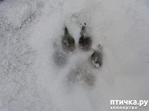 фото: Зимняя защита собачьих лап от реагентов