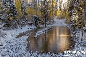 фото: Первый снег. Ноябрьск.