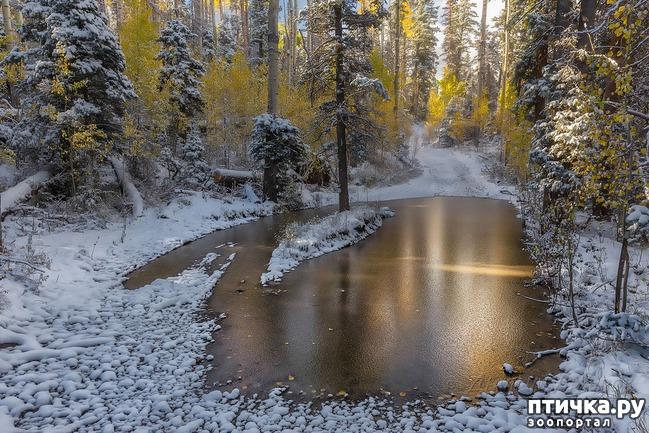 фото 1: Первый снег. Ноябрьск.