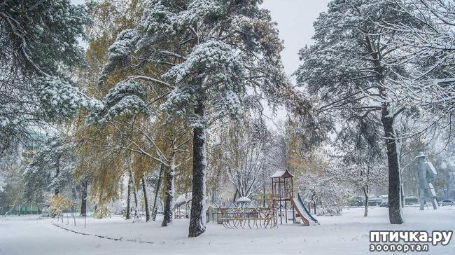 фото 2: Первый снег. Ноябрьск.