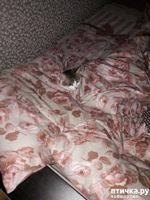 фото: Что еще может быть с кошкой? Что сказал второй ветеринар.