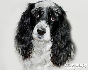 фото: Общие правила мытья собаки.