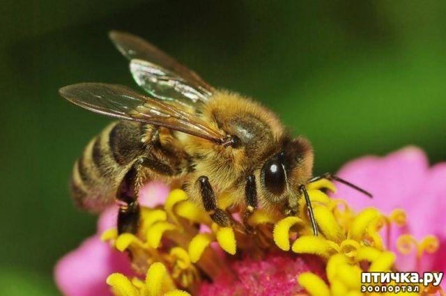 фото 1: В Австрии мужчину приговорили к тюрьме за убийство пчел
