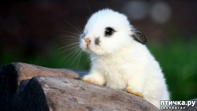 фото 5: Фотографии милых животных