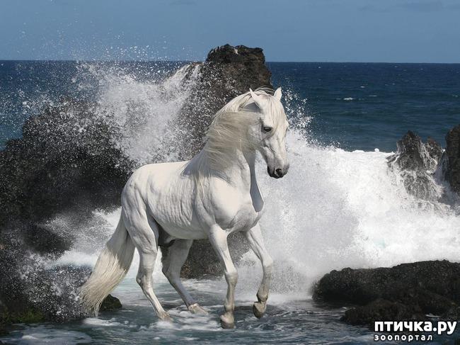 фото 6: Фотографии милых животных