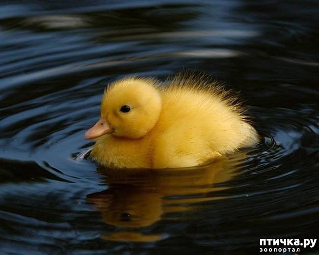 фото 11: Фотографии милых животных