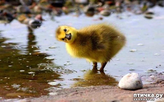 фото 15: Фотографии милых животных