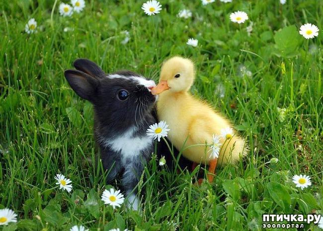 фото 16: Фотографии милых животных