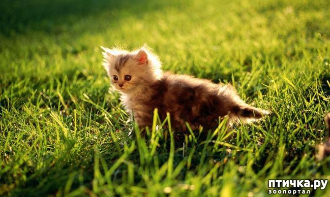 фото 18: Фотографии милых животных