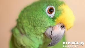 фото 23: Фотографии милых животных