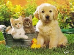 фото 27: Фотографии милых животных